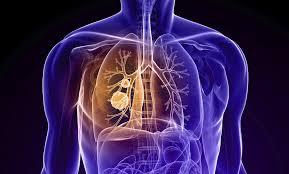 الأشعة العادية و المقطعية علي الصدر