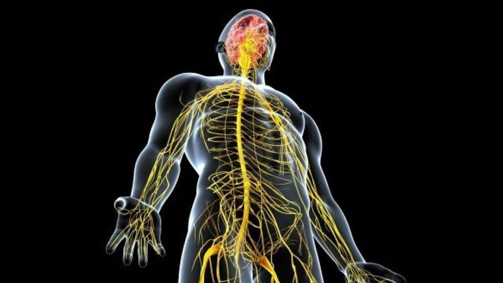 الجهاز العصبي والموجة الثالثة لفيروس كورونا